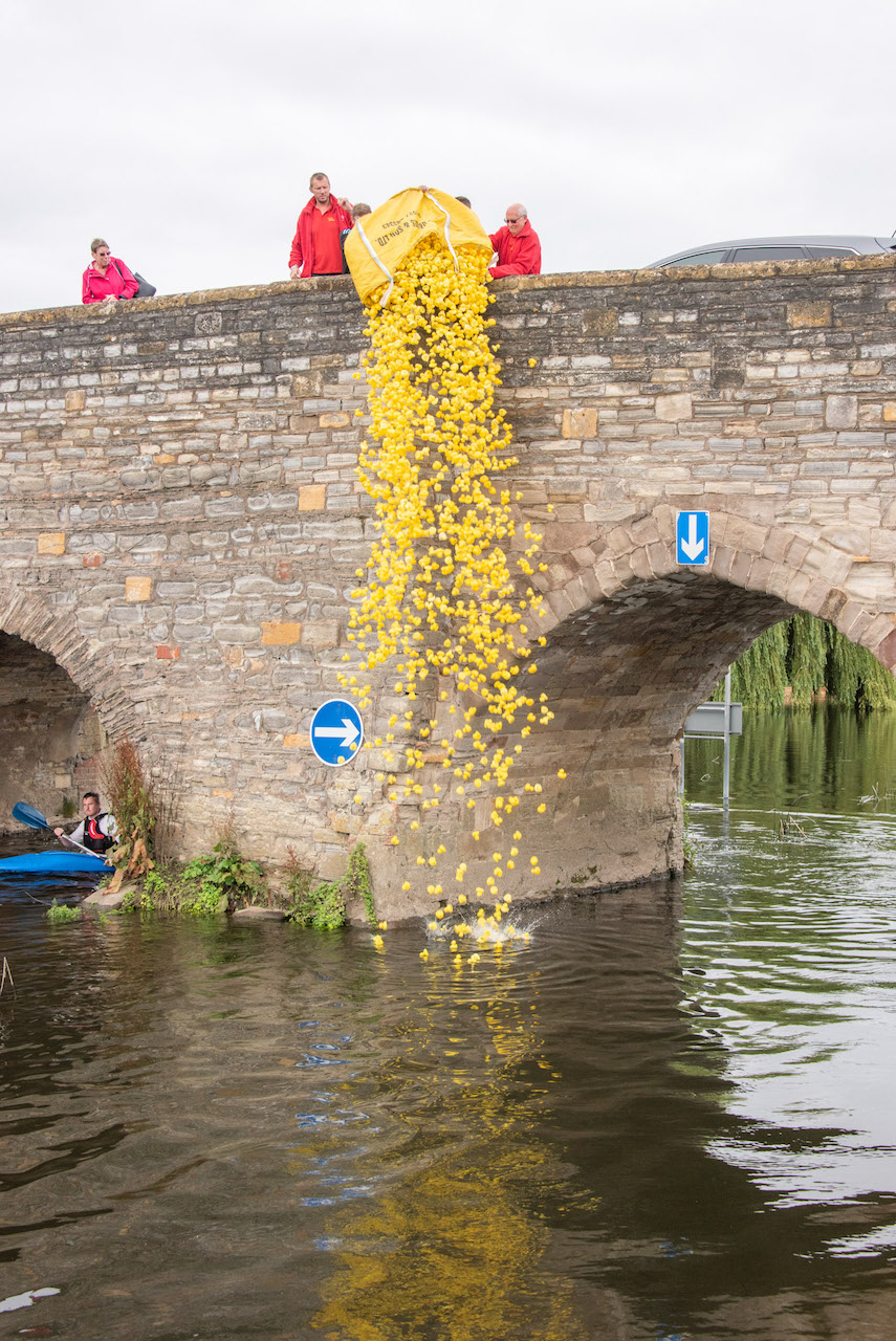Tipping the rubber ducks into the Avon